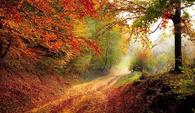 该图片由Valiphotos在Pixabay上发布